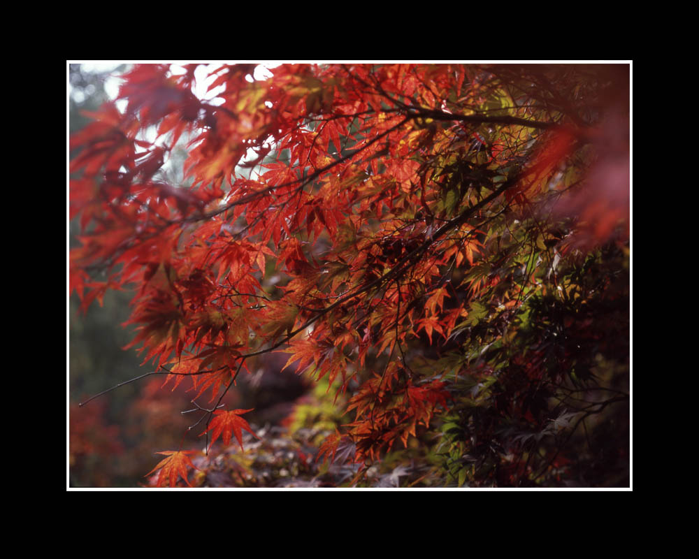 Autumn Leaves copy